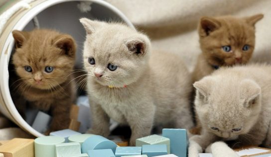 Newborn Kitten Tips On Choosing A Newborn Kitten