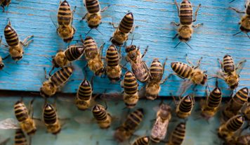 Annoyed Of Those Painful Stings? Exterminate Bees For Good!